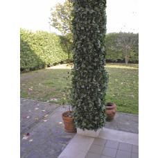 Sempreverde colonna 0,35x10