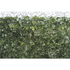Sempreverde® Point dimensioni 1x3. Tipo di foglia: edera