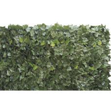 Sempreverde® Double dimensioni 1.5x3. Tipo di foglia: edera