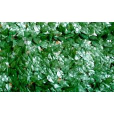 Sempreverde® Point dimensioni 1x3. Tipo di foglia: pitosforo