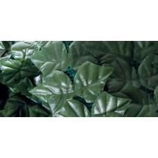 Sempreverde® Point dimensioni 1.5x3. Tipo di foglia: lauro