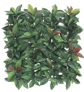 Sempreverde® Plast dimensioni 1x1. Tipo di foglia: photinia